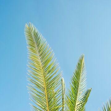 Palm tree and blue sky by NoeliaUroz