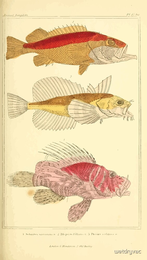 The Animal Kingdom by Georges Cuvier, PA Latreille, and Henry McMurtrie 1834  086 - Pisces Fish by wetdryvac