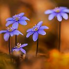 Blue liverworts in the morning sun by JBlaminsky