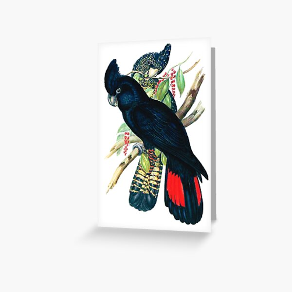 Australian Banksian Black Cockatoo Greeting Card