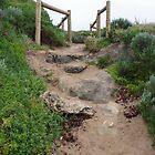 Footpath At Point Peron by lezvee
