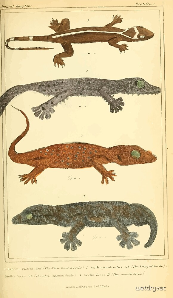 The Animal Kingdom by Georges Cuvier, PA Latreille, and Henry McMurtrie 1834  014 - Reptilia Reptiles by wetdryvac