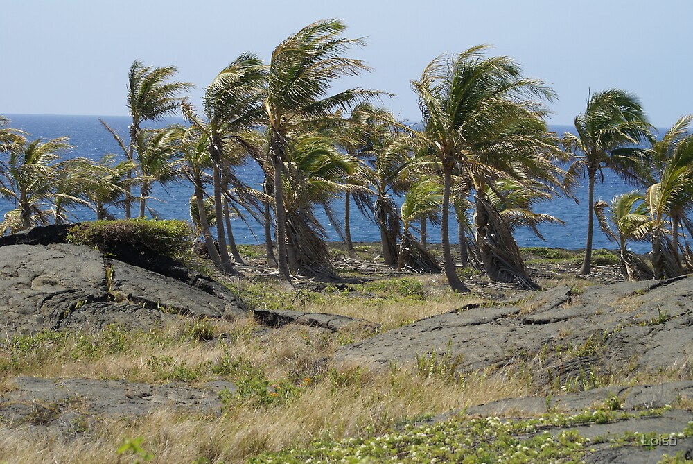 Palms Amidst the Lava by Loisb