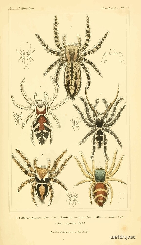 The Animal Kingdom by Georges Cuvier, PA Latreille, and Henry McMurtrie 1834  399 - Arachnides Arachnids by wetdryvac