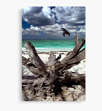Sanibel Canvas Print