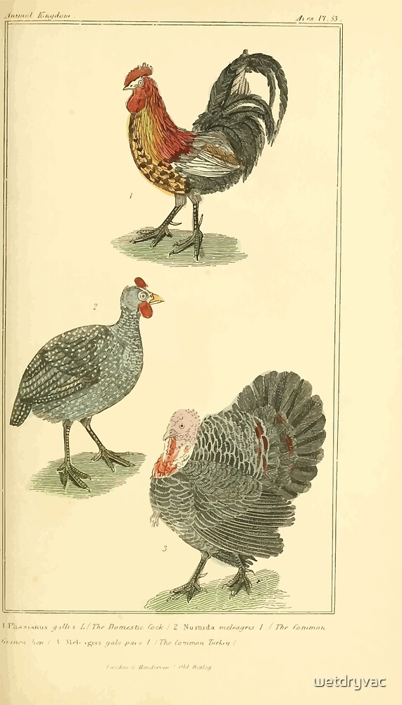 The Animal Kingdom by Georges Cuvier, PA Latreille, and Henry McMurtrie 1834 601 - Aves, Avians, Birds by wetdryvac