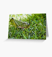 Locust - Close Up Greeting Card