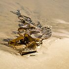 Kelp Cameo - Beach Art by Mother Nature  by Georgia Mizuleva