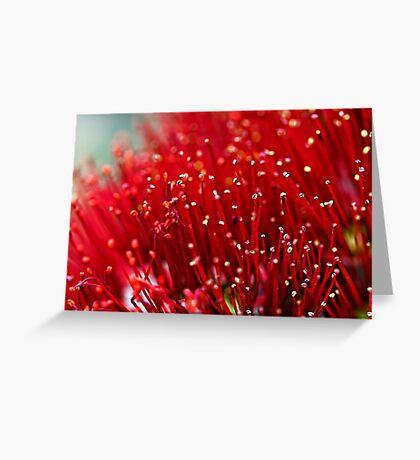 Pohutukawa Flower Greeting Card