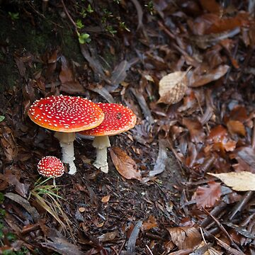 Fly Agaric by melbournedesign