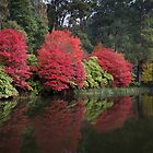 Autumn in the Dandenong Ranges by jamjarphotos