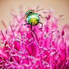 Green Bottle Fly by heidiannemorris