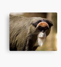 De Brazza's monkey profile Canvas Print
