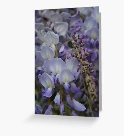 Purple Vine Greeting Card