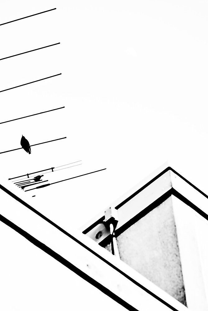 Bird On A Wire by David Warren