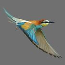 Kingfisher in flight by MagnaCarter