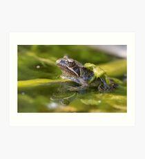 Common Froglet Art Print