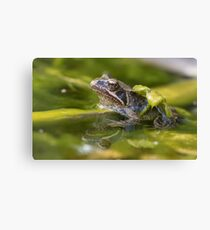 Common Froglet Canvas Print