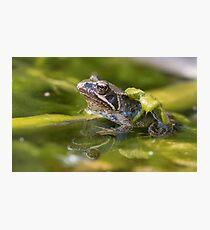 Common Froglet Photographic Print