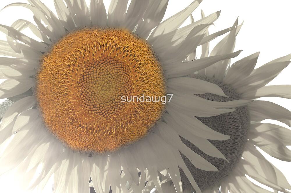 Sunny Flower by sundawg7