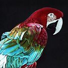 Avian: Perched Parrot (Red-and-Green Macaw) by NoelleMBrooks