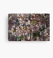 Hello Blossoms Canvas Print