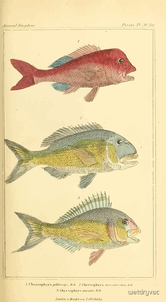 The Animal Kingdom by Georges Cuvier, PA Latreille, and Henry McMurtrie 1834  113 - Pisces Fish by wetdryvac