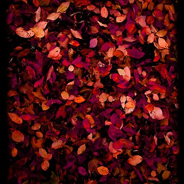 Autumn Leaves by nitschkeb