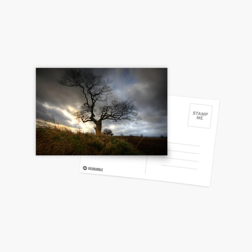 A tree Postcard