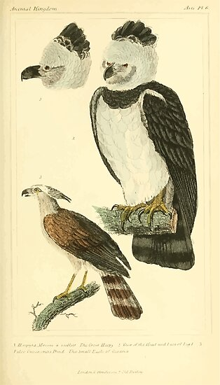 The Animal Kingdom by Georges Cuvier, PA Latreille, and Henry McMurtrie 1834 649 - Aves Avians Birds by wetdryvac