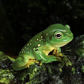 Frog by lrspann1