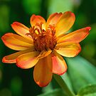 Orange Flower by Michael Moriarty