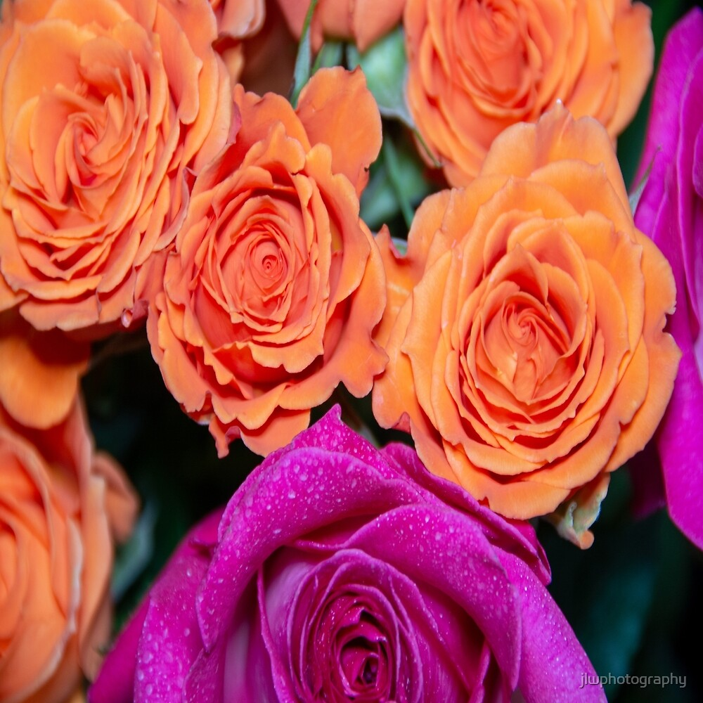Orange and White Roses with pink tips by jlwphotography