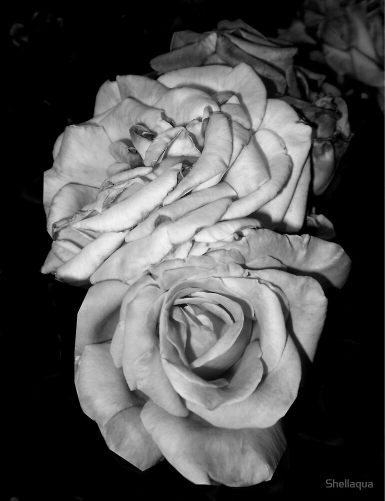 relaxed achromatic roses 05/12/18 by Shellaqua
