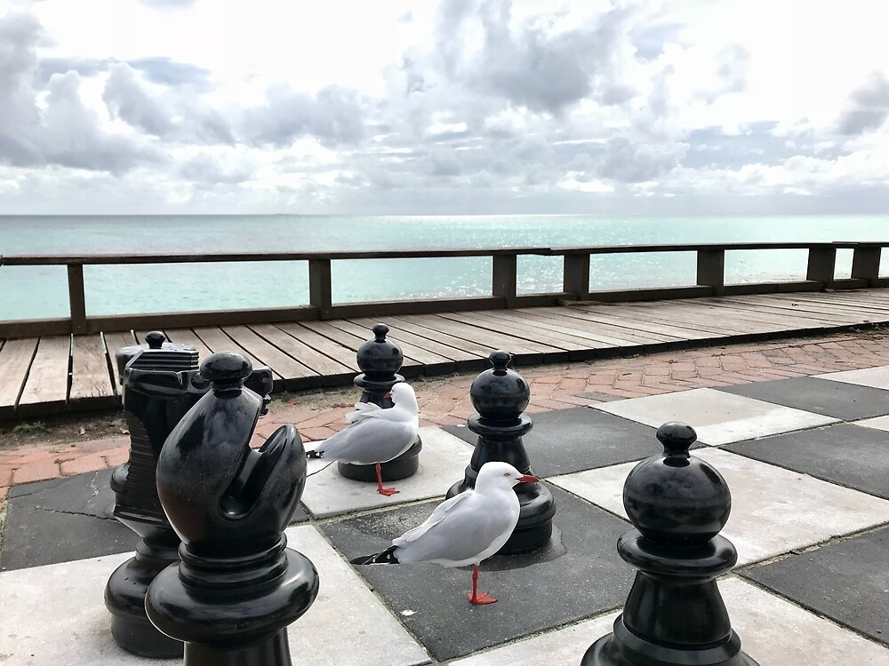 Gulls playing chess by Annie Smit