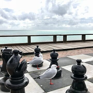 Gulls playing chess by AscensionEd