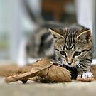 Autumn Kitten  by AndreaEL
