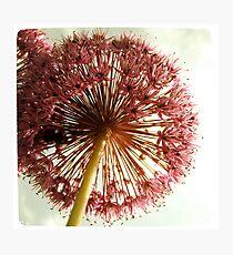 Flower Explosion Photographic Print