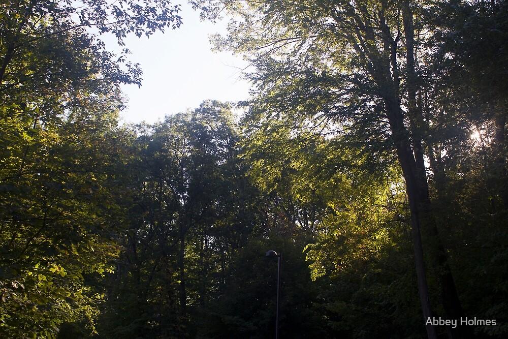 Treeline by Abbey Holmes