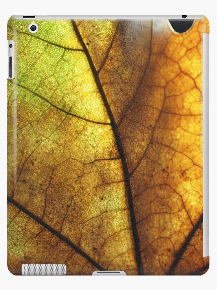 Close up of Autumn Leaf by sugarpixie10988