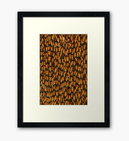 Honeybees Framed Print