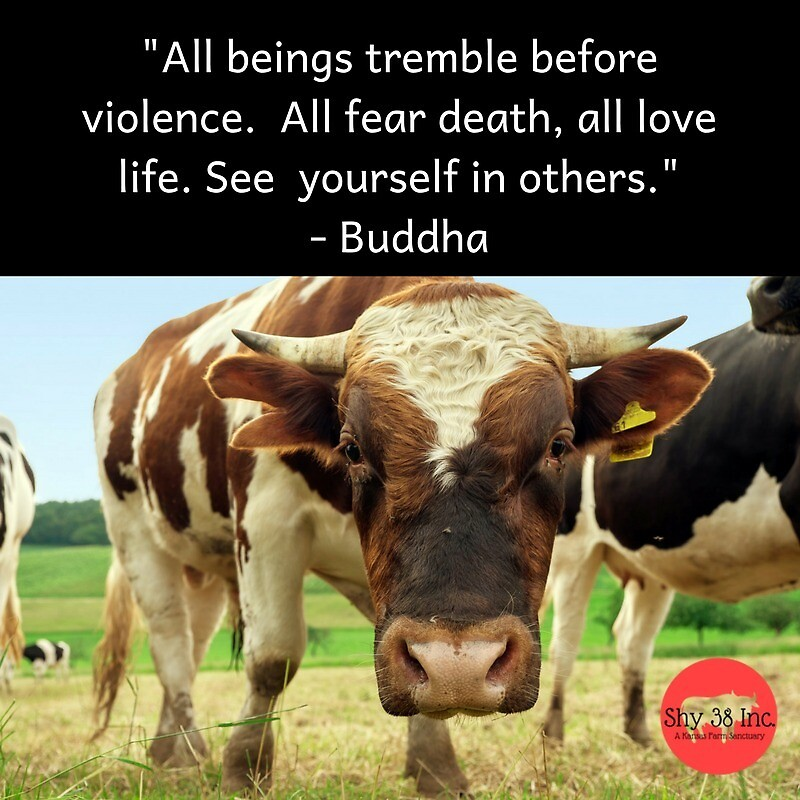 Cow Buddha Quote Sticker by cattleonthehill