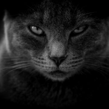 Black cat by SteviePix