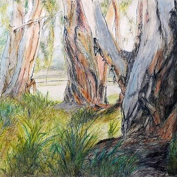 Evening Glow through the Paperbark Trees - Cooktown, Qld, Aus. by artenjoyment