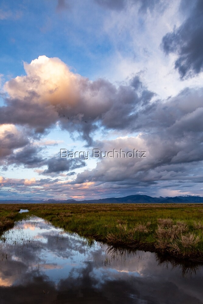 Meadow Scape by Barry Buchholtz