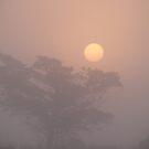 Foggy Sunrise in Wachapreague by elasita