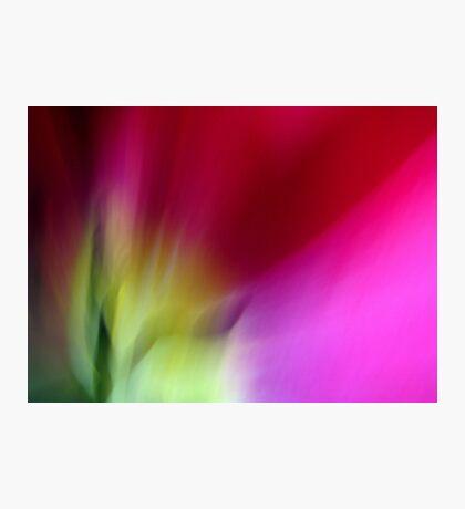 Tulip Sunrise Photographic Print
