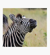 Spirited zebra and butterfly Photographic Print