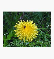 Flower, or just another weed? Photographic Print