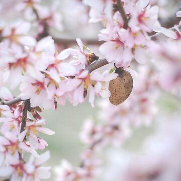 Almond trees in bloom by NoeliaUroz